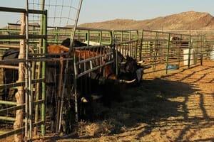 Ashcreek Ranch Academy Toquerville Utah